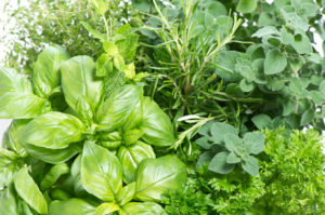 locally grown herbs, pesticide free herbs, wild nettle gardens